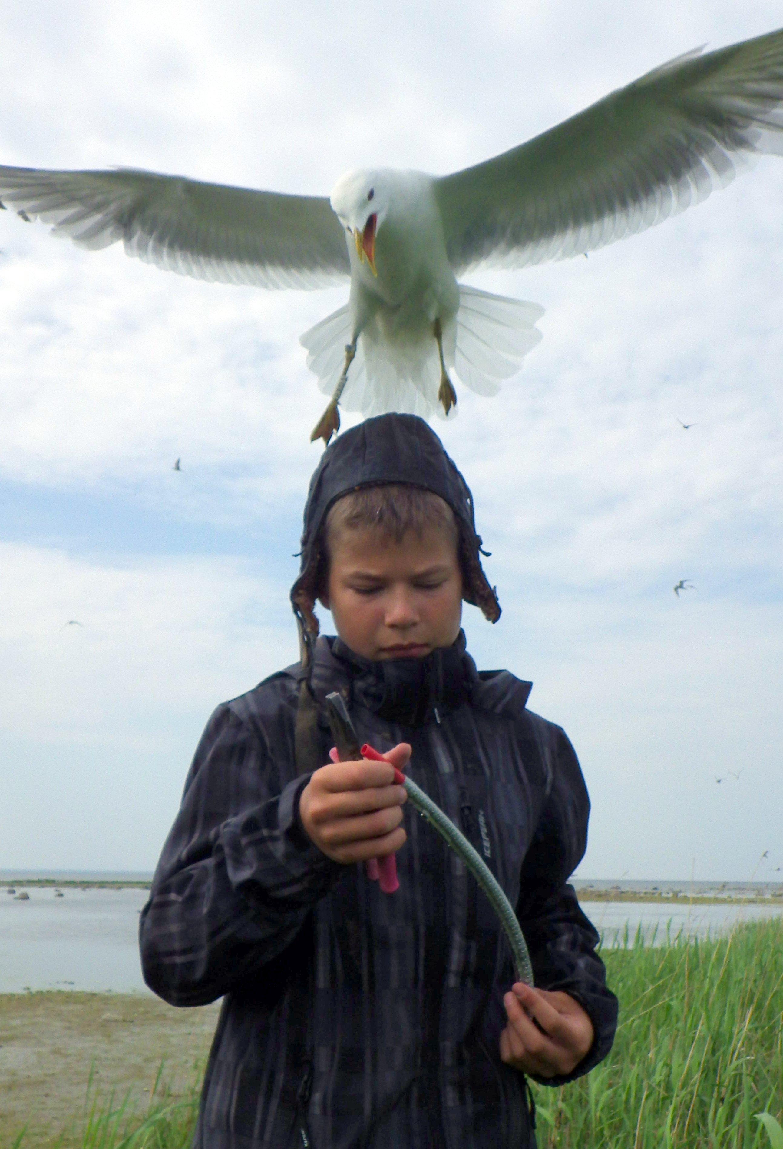 Budding ornithologist