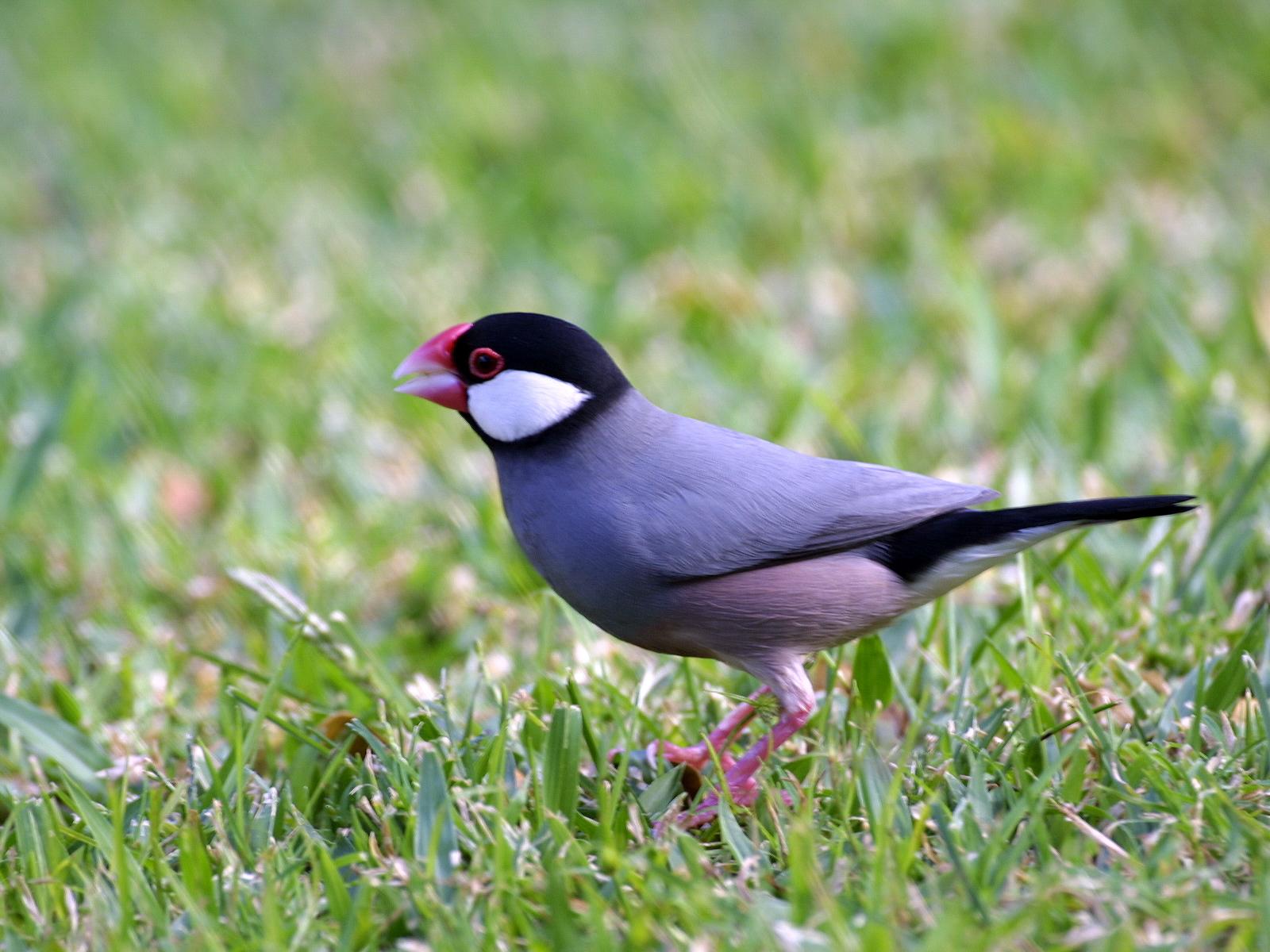 north america birds u2013 ornithology