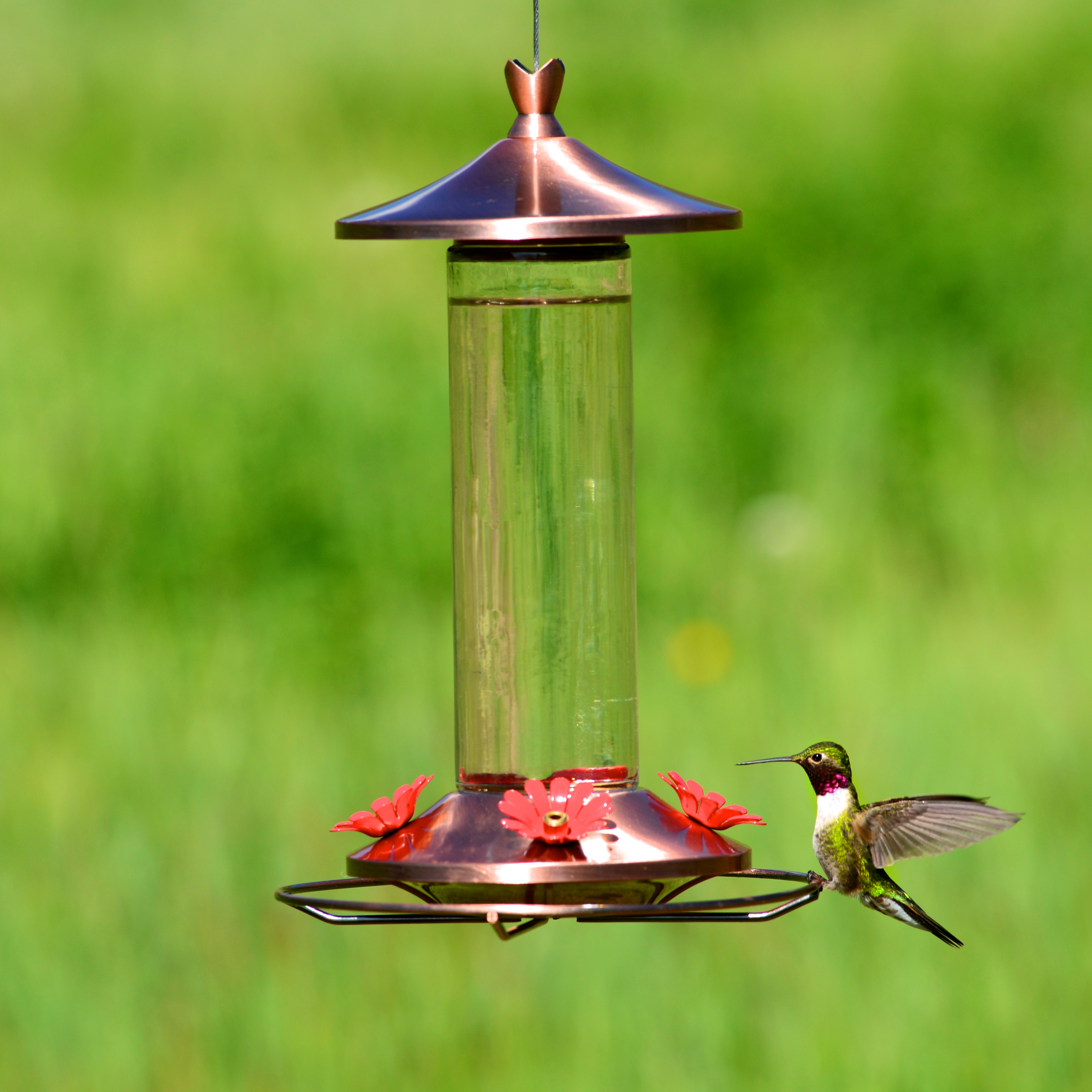 Perky-Pet® Elegant Copper Glass Hummingbird Feeder