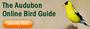 bird_guide_ad_option_17.fw_ (1)