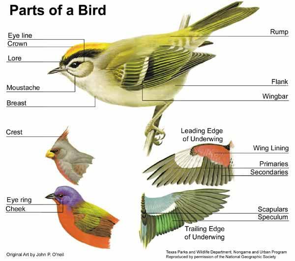birds_body_parts