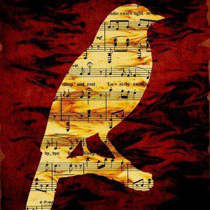bird-316799_640