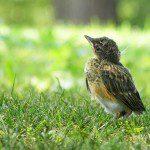 Baby_Bird_by_Monique_Haen
