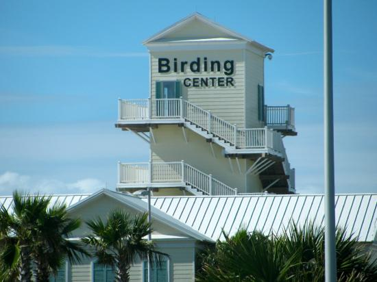 south-padre-island-birding (1)