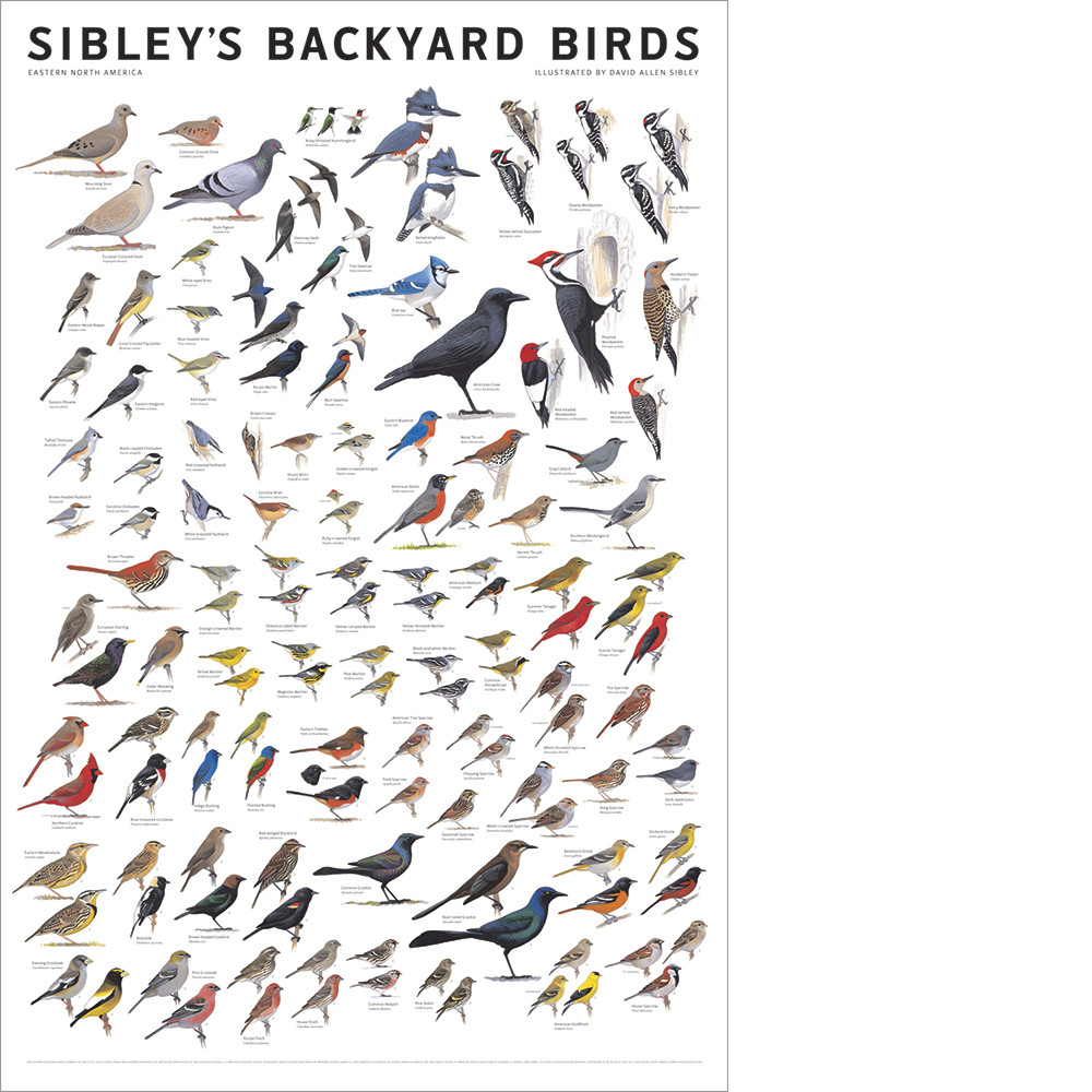 backyards for the birds u2013 ornithology