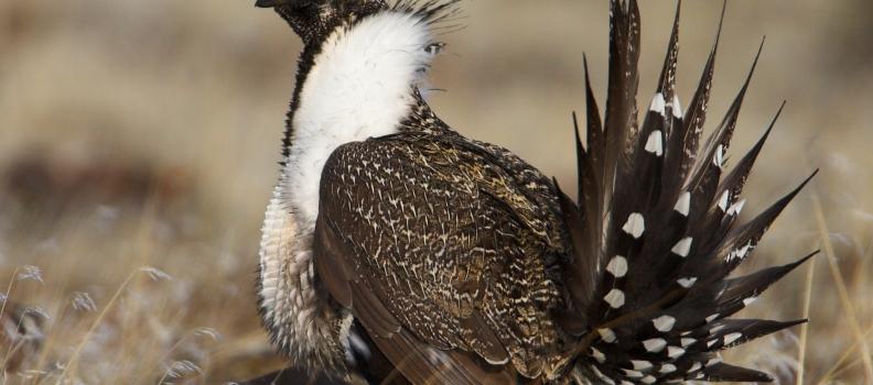 Cowboy State Birding